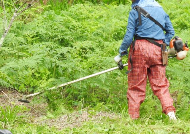 明和町で草刈りにかかる料金相場は?追加料金や業者選びのコツまで解説